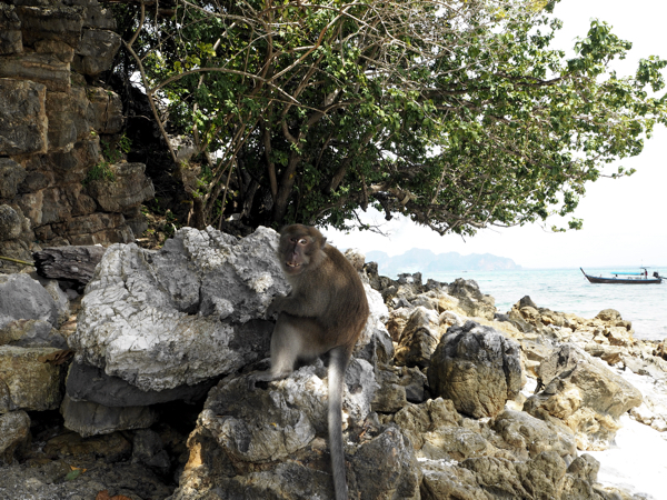 Thailand Travel Diary - Monkeys
